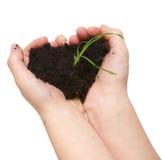 Manos del niño que llevan a cabo la suciedad con el crecimiento de la planta verde Fotografía de archivo libre de regalías