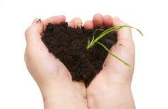 Manos del niño que sostienen el suelo con el crecimiento de la planta verde Fotos de archivo libres de regalías