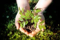 El niño da sostener una pequeña planta con las hojas verdes Fotos de archivo