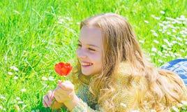 El niño disfruta de la fragancia del tulipán mientras que miente en el prado La muchacha en cara feliz sostiene la flor roja del  fotos de archivo libres de regalías