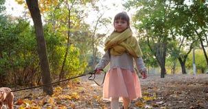 El niño está caminando con el pequeño perro en el correo en día soleado en el fondo de árboles en el otoño en la naturaleza metrajes