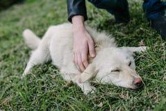 El niño frota ligeramente un perro blanco Foto de archivo libre de regalías