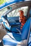 El niño pequeño en traje del tigre está en el coche Fotos de archivo libres de regalías
