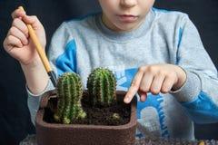 El niño pequeño estableció su cactus del houseplant imágenes de archivo libres de regalías