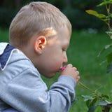 El niño pequeño huele un rosado subió Fotos de archivo