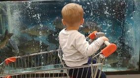 El niño pequeño mira los pescados en el acuario en el supermercado almacen de metraje de vídeo