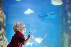 El niño pequeño mira pescados Imagen de archivo