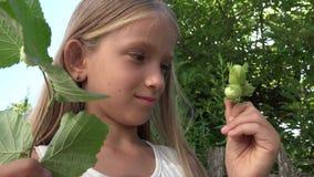 El niño que mira a Hazel Nut Outdoor en la naturaleza, el estudiar de la cara de la colegiala da fruto 4K