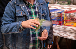 El niño que sostiene un periquito en pájaros de un mercado de pulgas se coloca Imagen de archivo libre de regalías