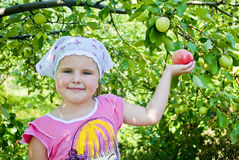 El niño recoge manzanas Fotografía de archivo libre de regalías