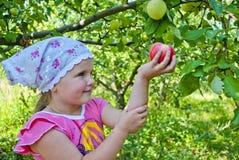 El niño recoge manzanas Imagen de archivo