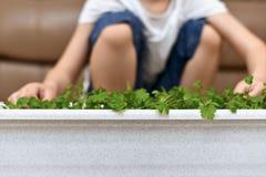 El niño se está sentando cerca de la cosecha crecida imagen de archivo libre de regalías