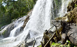 El Nicho waterfall in Scambray mountains. Cienfuegos province, Cuba. Royalty Free Stock Photography