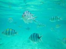 从El Nido菲律宾的异乎寻常的鱼 图库摄影