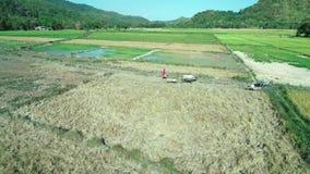 El Nido, Филиппины - 6-ое февраля 2019: Воздушная съемка прогулки фермера Филиппин через поле рисовых полей с водой видеоматериал