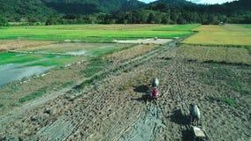 EL Nido, Filippine - 6 febbraio 2019: Colpo aereo della passeggiata dell'agricoltore di Filippine attraverso un campo di risaia c stock footage