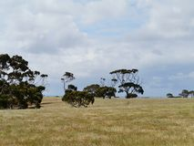El norte de la isla del canguro Fotos de archivo