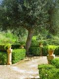 El nostálgico hermoso mediterranen el jardín imagen de archivo libre de regalías