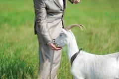 El novio alimenta una cabra en un prado verde Imagen de archivo