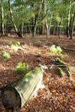 El nuevo bosque Foto de archivo