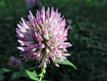 El nuevo florece en campos de blanco de Ucrania y verde rojos fotografía de archivo