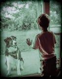 El nuevo perro de los vecinos. Foto de archivo libre de regalías