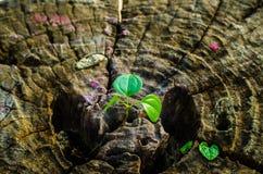 El nuevo verde se va nacido en el árbol viejo, fondo texturizado, foto común de la naturaleza, foco selecto Imágenes de archivo libres de regalías
