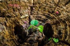 El nuevo verde se va nacido en el árbol viejo, fondo texturizado, foto común de la naturaleza, foco selecto Imagen de archivo libre de regalías