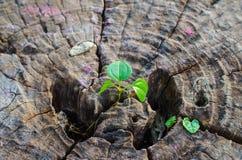 El nuevo verde se va nacido en el árbol viejo, fondo texturizado, foto común de la naturaleza, foco selecto Fotos de archivo libres de regalías