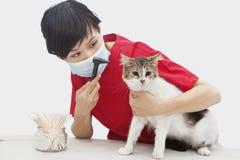 El oído de gato de examen veterinario femenino con un dispositivo del otoscopio contra fondo gris Imagen de archivo