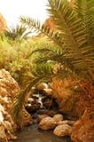El oasis de Chebika en Túnez Foto de archivo libre de regalías