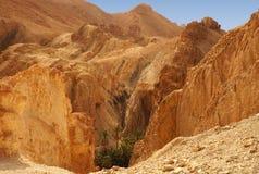 El oasis de Chebika en Túnez Fotografía de archivo