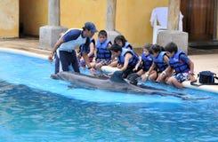 el obrar recíprocamente con los delfínes Fotos de archivo libres de regalías