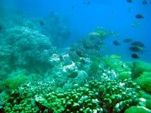 El Océano Índico de Isla Mauricio. Mundo subacuático. Fotos de archivo libres de regalías