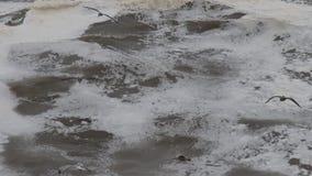 El Océano Pacífico almacen de metraje de vídeo