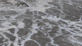 El Océano Pacífico almacen de video