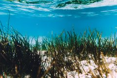 El océano tropical con la arena y la mala hierba del mar es subacuático El Océano Índico imagenes de archivo