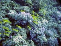 El Océano Índico. Mundo subacuático. Isla Mauricio. Imágenes de archivo libres de regalías