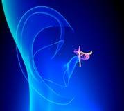 El oido interno detalló la anatomía con el pabellón de la oreja en fondo azul Fotografía de archivo libre de regalías