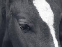 El ojo asombroso del caballo Foto de archivo libre de regalías