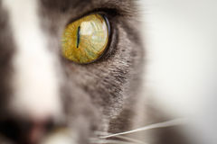 El ojo de gato Fotografía de archivo