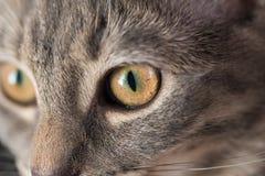 El ojo de gato Imagenes de archivo