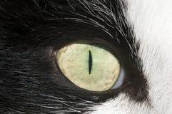 El ojo de gato Foto de archivo