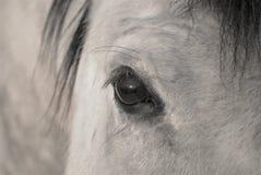 El ojo de un caballo Imágenes de archivo libres de regalías