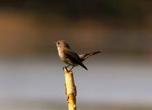 El ojo de un pájaro Foto de archivo libre de regalías