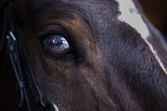 El ojo del caballo Imagen de archivo