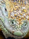 El ojo del dragón Foto de archivo libre de regalías