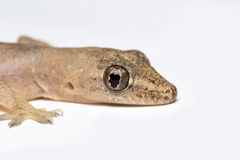 El ojo del lagarto Imagenes de archivo