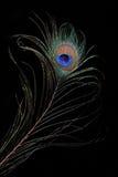 El ojo del pavo real imagenes de archivo