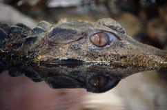 El ojo del reptil Fotos de archivo libres de regalías